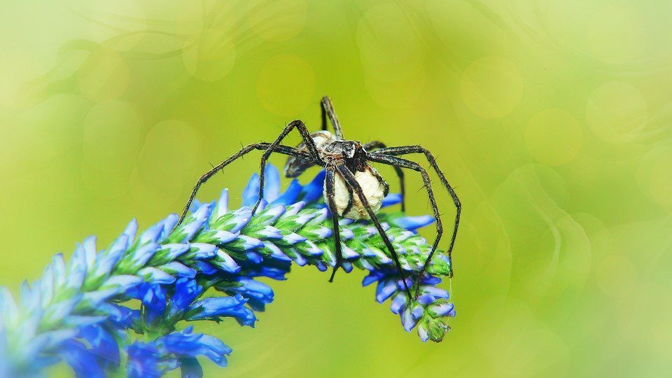 Interesting Facts About Spiders Females Can Lay Thousands Of Eggs