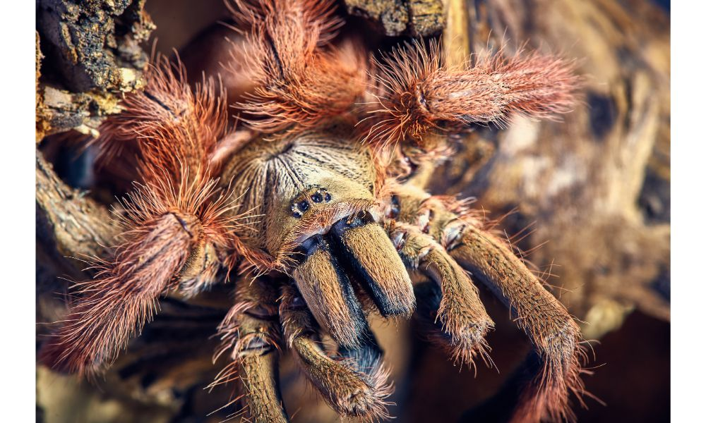 Everything you need to know about a spider pet's diet