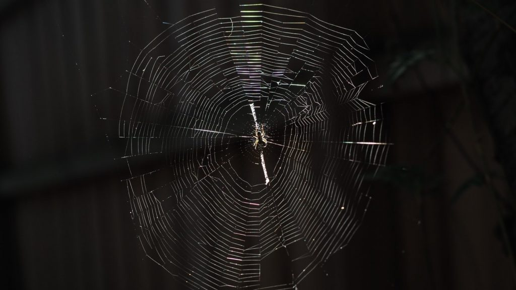 There Are Many Types Of Spider Webs