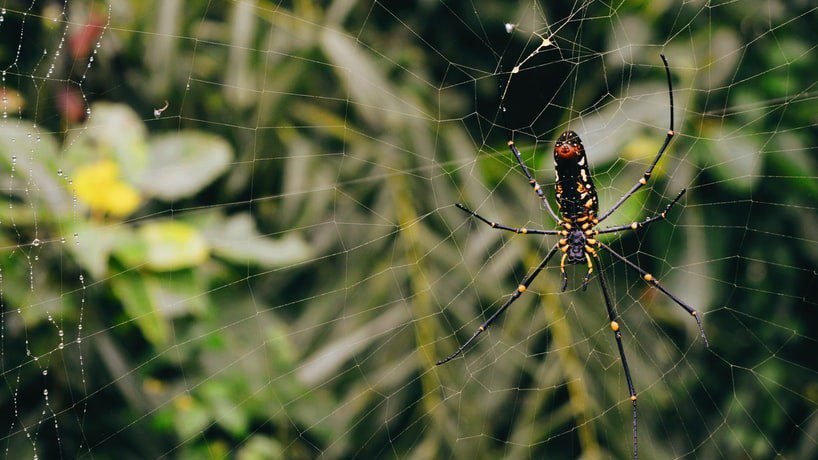 What Are Spider Webs Made Of?