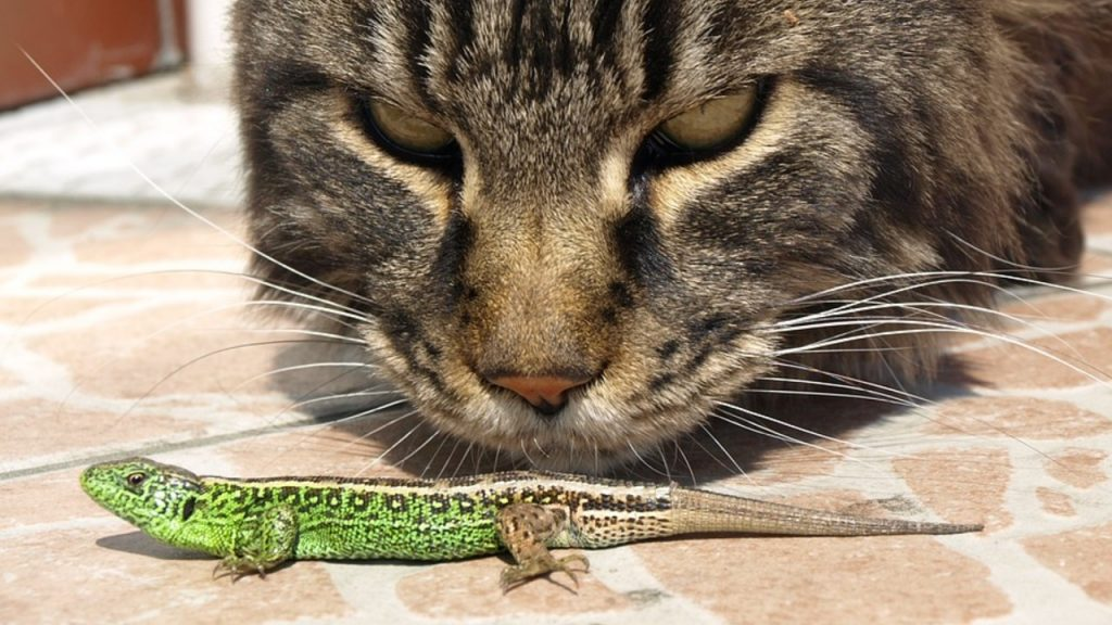 Is it a good idea to have lizards and cats?