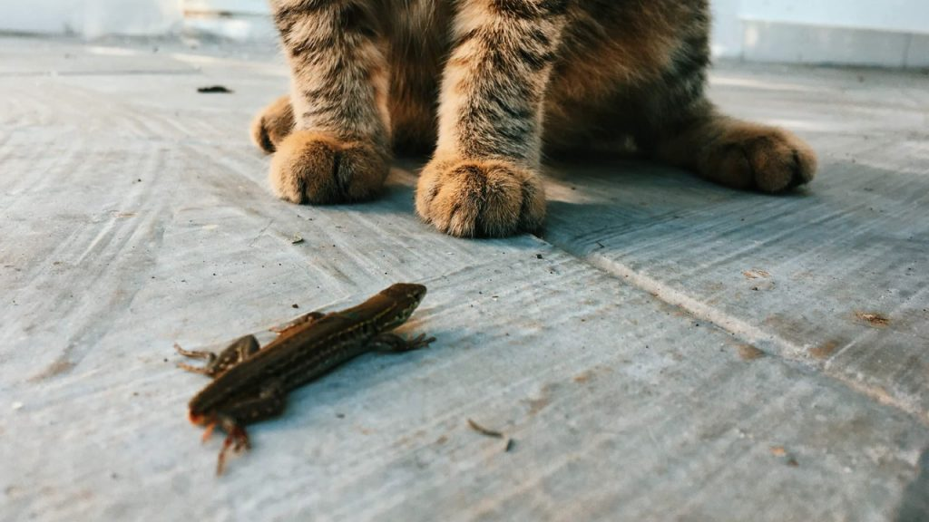 lizards and common house pets