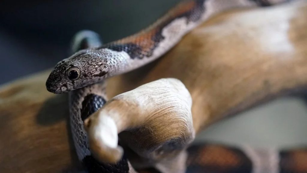 What is pet snake enrichment