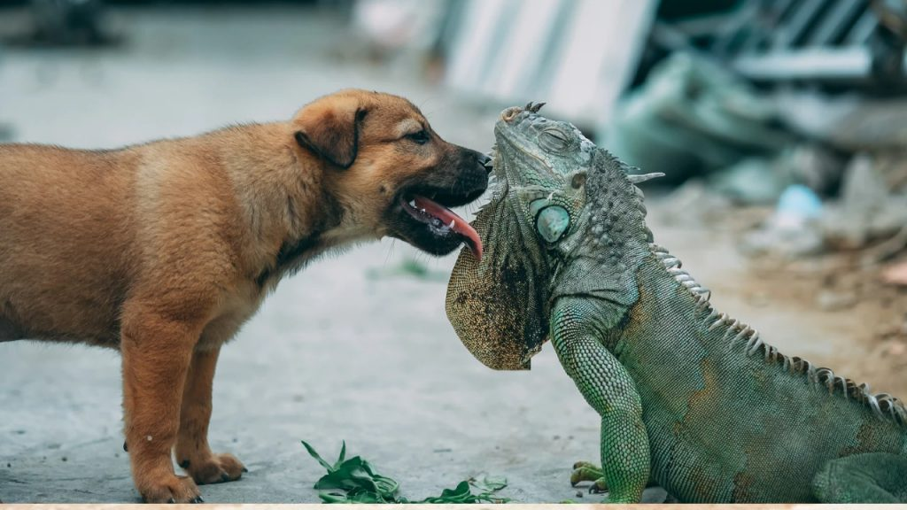 What you need to know about having pet lizards and dogs