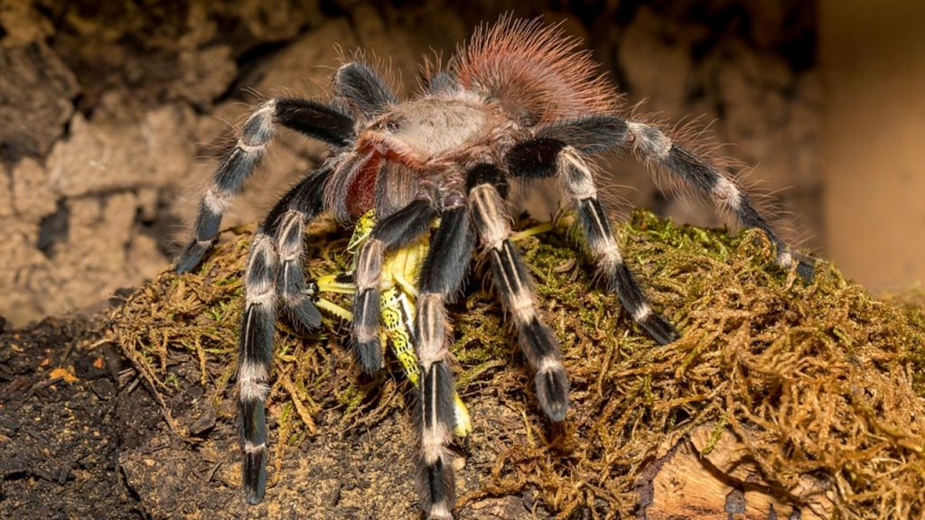 what you should give to your spider to eat